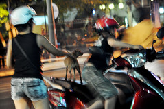 Ready to ride (Roving I) Tags: animals dogs pets waiting motorscooters transport street boys mothers helmets nightlife danang vietnam children motionblur attentive jeansshorts