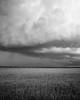 It's comming (CreArtPhoto.ro) Tags: wheat nori cloudy cumulonimbus clouds ripped romania galben tree copac grau furtuna sky cer storm blackandwhite dramatic miscare