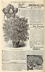 n47_w1150 (BioDivLibrary) Tags: flowers roses jones seeds co catalogs conard nurserystock westgrovepa plantsornamental bulbsplants usdepartmentofagriculturenationalagriculturallibrary bhlgardenstories bhlinbloom conardjonesco bhl:page=42484208 dc:identifier=httpbiodiversitylibraryorgpage42484208