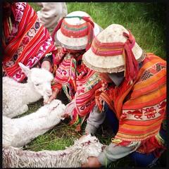 Cusco y Valle Sagrado (Pablo Aburto) Tags: peru cuzco cusco perú llamas sacredvalley alpacas ollantaytambo vallesagrado patacancha