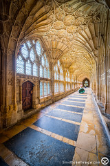 Photography at Gloucester Cathedral (timothyselvage) Tags: door uk travel england church architecture photoshop photography nikon doors cathedral unitedkingdom norfolk sightseeing gloucester norwich gb cloisters hdr highdynamicrange anglican protestant touristattractions gloucestercathedral fineartphotography d800 lightroom 2014 architecturalphotography historicbuildings churchofengland houseofworship photomatix 2013 houseofgod religiousbuilding historicattractions placestovisit localattractions nikkor1424mmf28 timothyselvage wwwtimothyselvagecom infotimothyselvagecom infotimothyselvage timothyselvagecom
