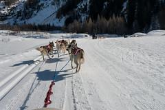 DSC03448_s (AndiP66) Tags: sony dscrx100ii dscrx100m2 rx100ii rx100m2 andreaspeters husky tour hundeschlitten schlittenhunde eskimo dog sled sledge oberwald wallis goms obergoms oberwallis winter schweiz suisse switzerland schnee snow mountains berge alps alpen obergomsvs valais