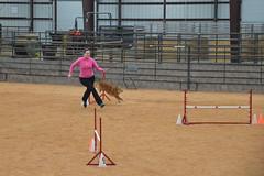 agility240 (jaimekay16) Tags: dog training austin agility k9 xpress nadac k9x
