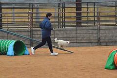 agility267 (jaimekay16) Tags: dog training austin agility k9 xpress nadac k9x