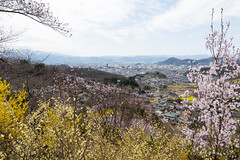 (GenJapan1986) Tags: 2015        japan fukushima spring  nikond610 distagont225 zf2 cherryblossom carlzeiss