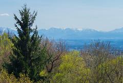 Um Linz (ecker) Tags: trees mountains nature berg forest linz landscape austria österreich spring natur berge alpen landschaft wald bäume oberösterreich umgebung frühling upperaustria freinberg