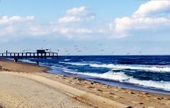 belmar   new jersey (jacktyler__) Tags: ocean new sea seascape beach pier seagull shore jersey avenue belmar 5th