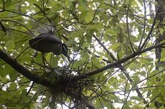 KCC_0667 (kccornell) Tags: lake bird heron night michael louisiana kayak martin paddle yallow crowned
