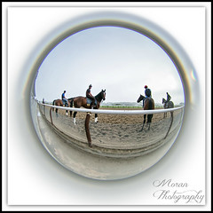 Tonalist (EASY GOER) Tags: park horses horse ny newyork sports lensbaby race canon track belmont running racing fisheye 5d athletes races thoroughbred equine thoroughbreds clement markiii