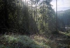 call of the sticks (natebeaty) Tags: film washington snoqualmie olympusxa dwaynesphoto lomo800