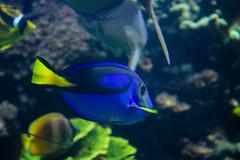 IMG_0033 (Samihan Patel) Tags: blue moon flower zoo monkey jellyfish seahorse turtle snake houston flamingos frog crocodile elephants sealion dory htx