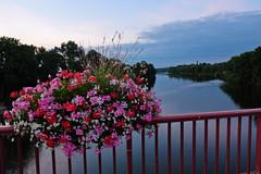 DSCF2484 (kuzdra) Tags: couchedesoleil soir evening sunset sarthe riviere river fleurs flowers