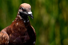 DSC_0278 (Scott Lewis Photography.1) Tags: nature birds animals closeup na