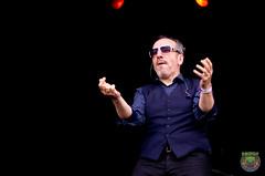 Elvis Costello-50