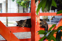 Today's Cat@2016-08-06 (masatsu) Tags: cat catspotting thebiggestgroupwithonlycats pentax mx1