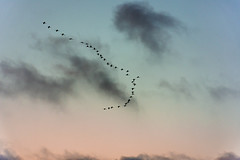 _DSC8163.jpg (kaoukabi jaouad) Tags: birds formation sky late afternoon peaceful morocco casablanca