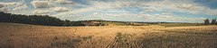 Panorama champs Haute-Garonne (Chlo +++) Tags: panorama champs 31 midipyrnes fields field yellow blue sky ciel arbres trees tree arbre montjoire hautegaronne nuages clouds nuage cloud canon os400d