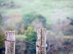 arame farpado (José Carlos Brandão) Tags: arame farpado cerca paisagem