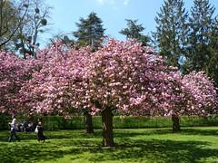 Parc de Sceaux au printemps, Hauts-de-Seine, avril 2013 (vlefort2003) Tags: ledefrance avril parc printemps 92 sceaux parcdesceaux hautsdeseine avril2013 photoalaindelavie 25avril2013