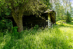 DSC_2462 (czargor) Tags: mountains landscape hill mountainside beskidy inthemountain dogtrekking beskidzywiecki