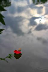 drift (digitalmao) Tags: water lily petal floating wind explore