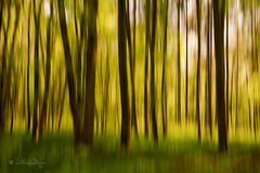 Wald / Forest (Claudia Bacher Photography) Tags: wald forest natur nature outdoor bäume tree schweiz suisse switzerland sonya7r