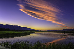 Hues in the marsh (Dave Arnold Photo) Tags: sunset wild summer sky usa lake mountains hot reflection sexy bird ass reed nature beautiful sex canon river naked nude landscape photography spread us photo big high fantastic montana tit photographer mt tour outdoor dusk wildlife arnold pussy scenic picture peaceful pic photograph american valley huge wife upskirt serene marsh range milf mont idyllic nationalwildliferefuge bitterroot stevensville misoula 24105mm ravallicounty davearnold leemetcalf 5dmkiii davearnoldphotocom