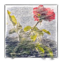 rosa  rosae (Unos y Ceros) Tags: rosa rosae agua contraluz terminillo aragn textura luz unosyceros 2016 lightroom nikond700 zaragons zaragoneses europaunineuropeaueinvarietateconcordia