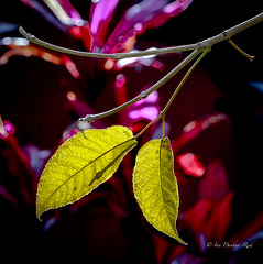 The colours of Winter (idunbarreid) Tags: foliage