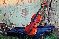 IMG_9838b - 11.09.2015 (hippo1107) Tags: violine geige musik instrument stillleben zahnderzeit antik alt canoneos650d canon eos 650d september 2015