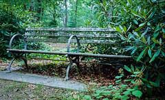 Bench Reclaimed 1 - Bayard Cutting Arboretum (A Screaming Comes Across the Sky) Tags: nikon vintage f photomic ftn agfa vista nikkor ai 35mm film analog analogue outdoor foliage plant tree