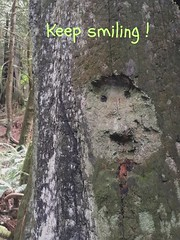 Dans la fort<> In the forest ! (France-) Tags: tree arbre face visage forest fort vancouver canada funny yeux eyes