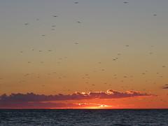 Birds flock to the sunset (Sean_Marshall) Tags: saugeenshores miramichibay portelgin lakehuron sunset sundown