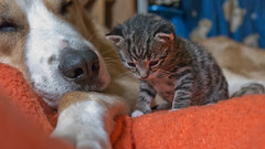 Good Friends :-) (*Nils aus Kiel*) Tags: baby kitten katze hund dog animals friends animalfriends pet closeup love feeling beautiful sweet tierheim weidefeld kappeln ngc