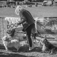 (john g (Birkenhead UK)) Tags: birkenheadparktransportfestival candid street mono 2016 birkenhead tangle dogs woman