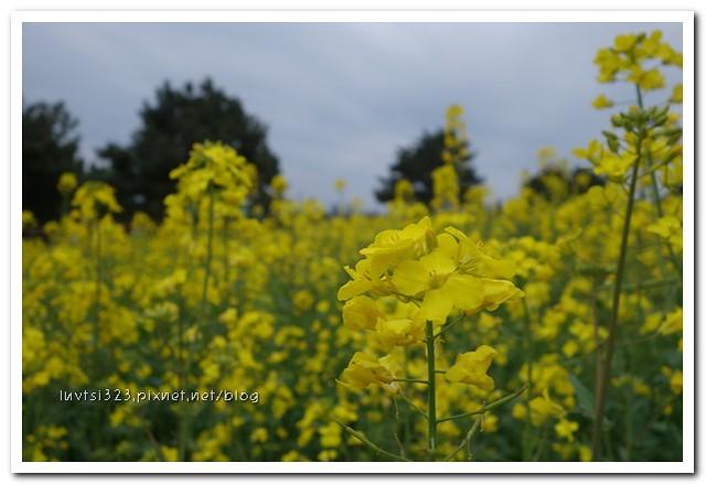 사귀포유체꽃축제22