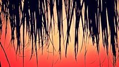 Palm sunset (Deb Jones1) Tags: travel sunset art weather 1 jones australia places explore tropical 1001nights deb flickrduel macrolife best4gpin bestphoto4gpinaug2011 bestphoto4gpinsep2011 debjones1