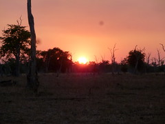 Sunset in the Luangwa Bush