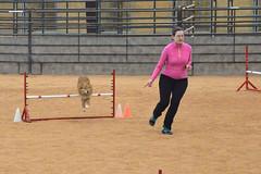 agility244 (jaimekay16) Tags: dog training austin agility k9 xpress nadac k9x