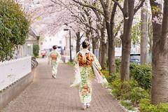 DS7_0285.jpg (d3_plus) Tags: street portrait sky woman plant flower nature girl japan walking spring scenery bokeh outdoor dusk fine daily human alcohol bloom  cherryblossom  sakura streetphoto kimono yokohama  tamron    dailyphoto   kawasaki  thesedays      fineday     japanesekimono tamronspaf2875mmf28   2875mmf28    tamronspaf2875mmf28xrdildasphericalif tamronspaf2875mmf28xrdild d700 tamronspaf2875mmf28xrdildasphericalifmacro  kanagawapref  nikond700  bestcloth