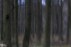 Mrz 2015_1 (AndyhookHL) Tags: trees distortion contrast forest sh kontrast wald bume mystic schleswigholstein mystisch verzerrung baumreihe ratzeburgersee lauenbur