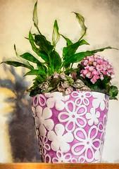 Purple Flowerpot (kckelleher11) Tags: photoshop purple olympus flowerpot effect omd em1 1240mm mzuiko