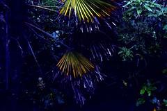 (stephen trinder) Tags: light shadow newzealand christchurch plants mist green water leaves rain mystery garden landscape foliage nz kiwi bushes damp christchurchnewzealand stephentrinder stephentrinderphotography