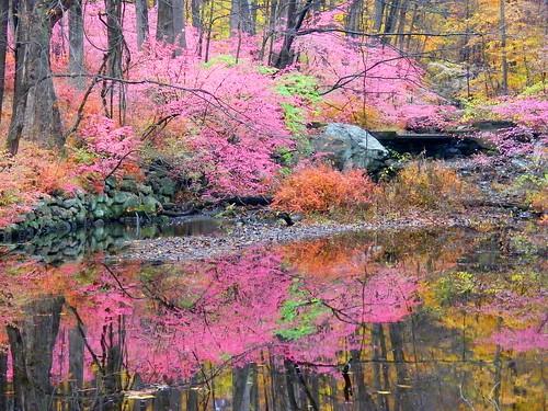 Pink Fall Reflection