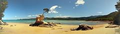 Abel Tasman NP (Garfield4989) Tags: neuseeland new zealand beach abel tasman nationalpark tree bay