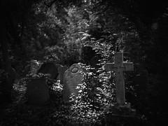_MG_6383.jpg (StephEvaPhoto) Tags: f14 24mm primelens canoneos art sigma blackwhite abneyparkcemetery canoneos6d cemetery 6d blackandwhitephotography monochromephotography stokenewington fullframe monochrome blackandwhite graveyard prime sigma24mmf14dgart unitedkingdom dg uk london