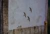 Lisbon, Portugal (Alan-S2011) Tags: tower portugal architecture river earthquake downtown lisbon statues rivers douro ruaaugusta baixa neogothic tagus spiralstaircase vascodagama bairroalto 1870 1755 avenidadaliberdade santajustaelevator 1873 rossiosquare marquesdepombal ruadesantajusta arcodaruaaugusta nunoalvarespereira viriato municipalsquare ruadossapateiros pombaline elevatorofcarmo comerciosquare raouldemesnierduponsard arcodobandeira santosdecarvalho verissimojosedacosta adpedroiv osportuguezes manualreinaldodossantos piresbandeira