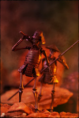 Kaiyodo KT Project - Jizai Okimono [Samurai] (Ed Speir IV) Tags: kaiyodo revoltech ktproject kt project jizaiokimono jizai okimono skeleton skeletons warrior warriors armor battle samurai sword spear monster creature skull skulls fantasy takeya takeyashiki takayukitakeya japan japanese import figure figures diorama actionfigure actionfigures toy toys toyphotography figurephotography macro skeletonwarrior