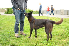 Cliffs of Moher (abbyef) Tags: cliffsofmoher countyclare ireland dog guion