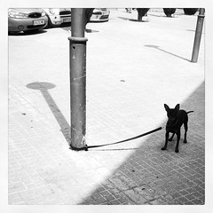 Instinto de supervivencia (Markus' Sperling) Tags: instagramapp square squareformat iphoneography uploaded:by=instagram inkwell dog blackwhite blanco y negro perro gos can sol sun calor summer verano street calle carrer